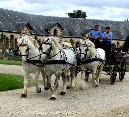 Cavalos de tração, conheça 10 raças