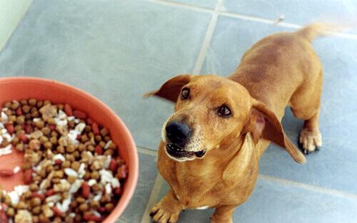 Cachorro ao lado de vasilha com ração