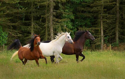 Cavalos correndo ao ar livre