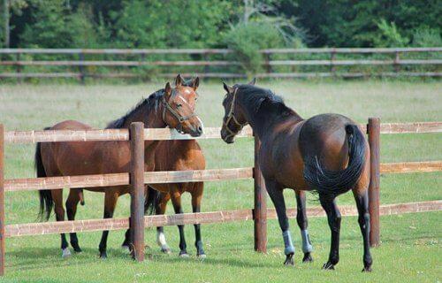 Criação de cavalos: cuidados e conselhos
