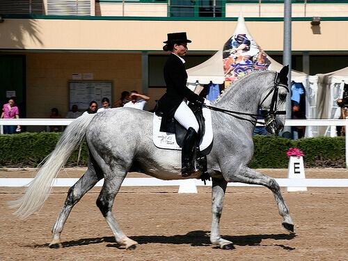 Curiosidades sobre o cavalo espanhol de raça pura ou cavalo andaluz