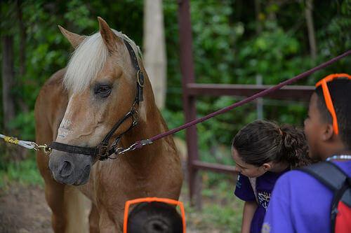 Terapia com cavalos para crianças