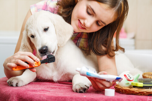 Dona escovando os dentes do cachorro