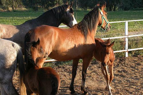 Como preparar um espaço para seu cavalo?