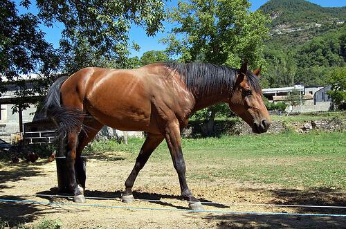 Ferração de cavalos sem riscos