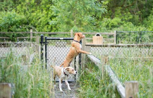 Cachorros olhando sobre a cerca