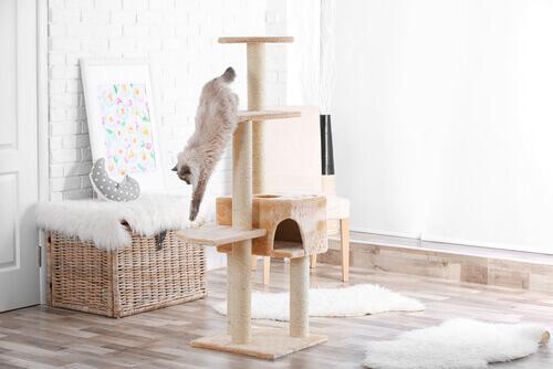 Gato pulando no arranhador