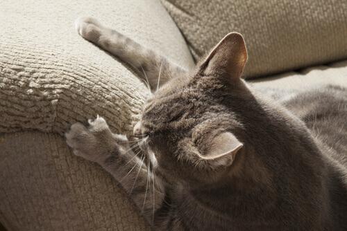 Como fazer com que o gato não arranhe a casa inteira?