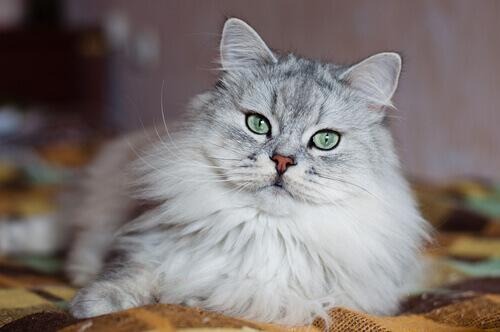 Por que os gatos têm má fama?
