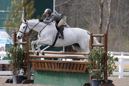 Cavalo branco saltando obstáculo