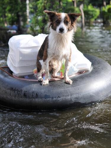 Cachorro em cima de boia, durante enchente