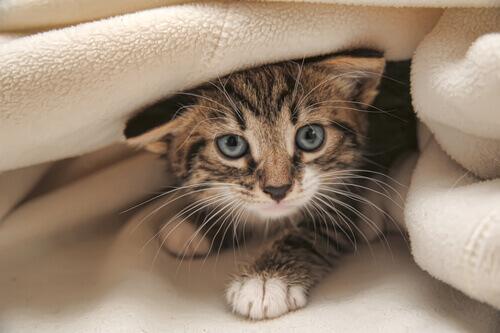 6 mitos sobre os gatos
