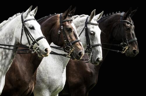 Belos cavalos alinhados