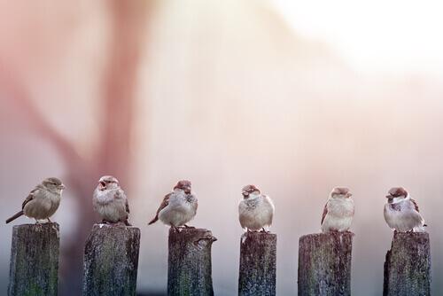 Nomes para pássaros: conheça 15 sugestões