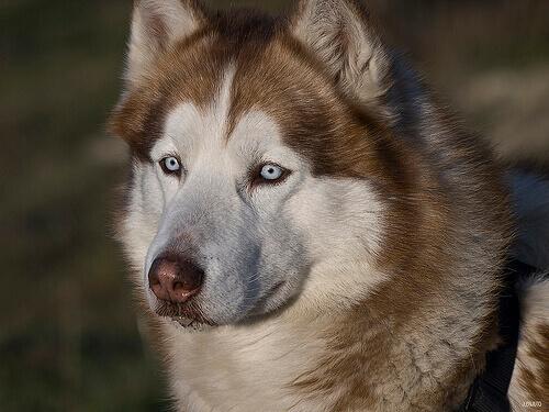Olho seco em cães: causas, sintomas e tratamento
