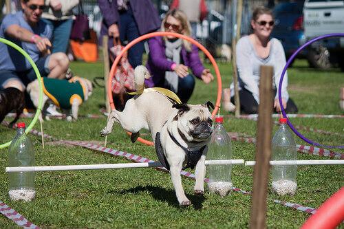 Parques para cães: dê emoção aos passeios de seu pet