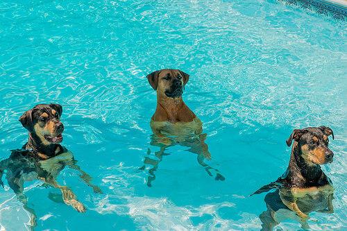 Como fazer os cães perderem o medo de água?