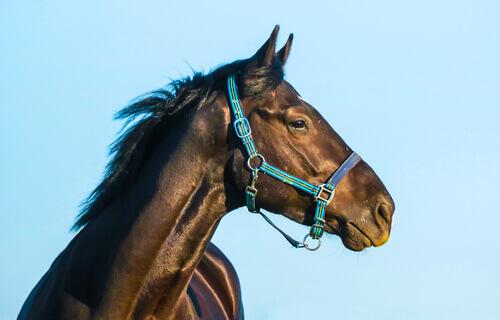 Personalidade do cavalo: conheça suas características
