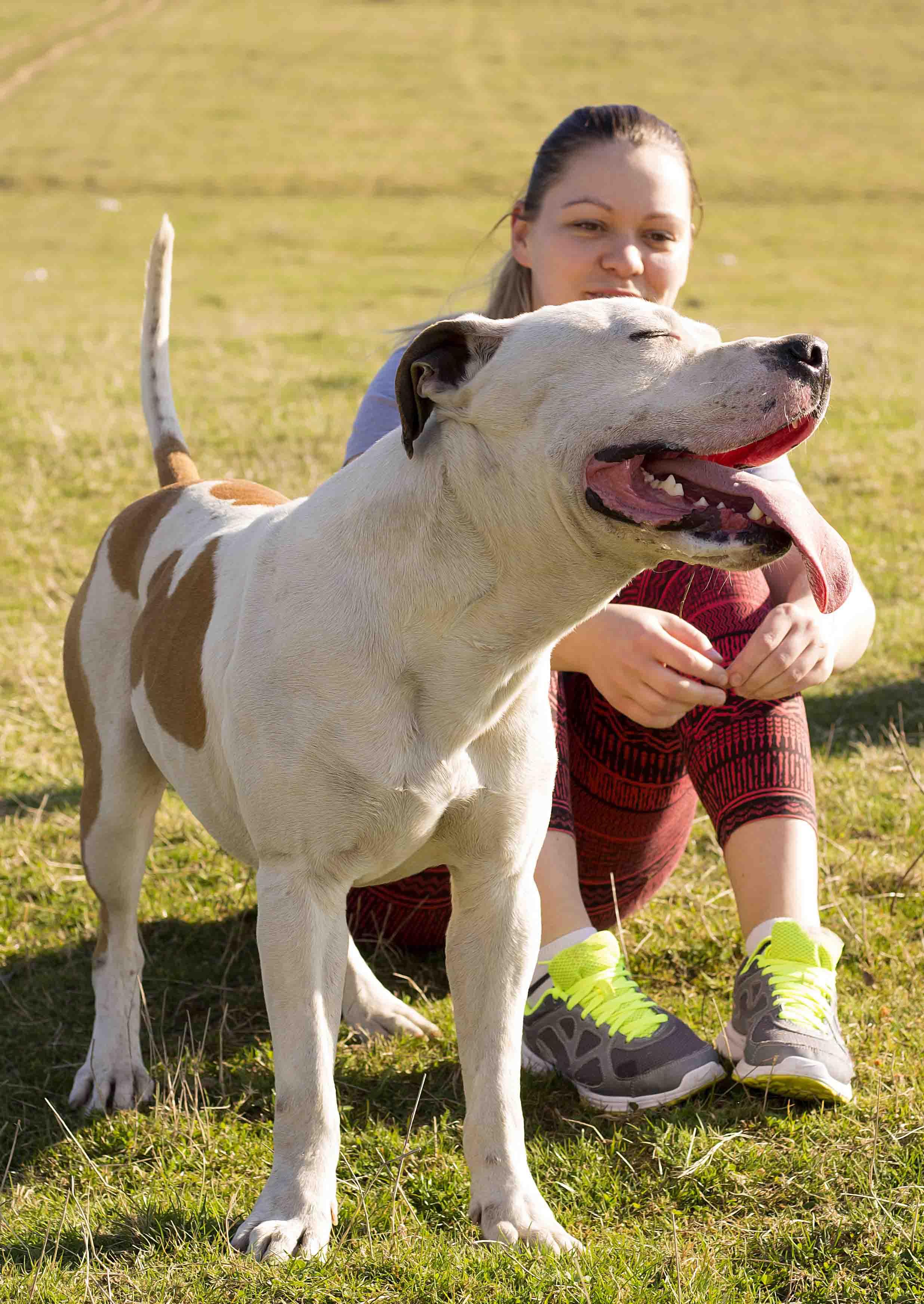 O Pitbull: um excelente cão babá