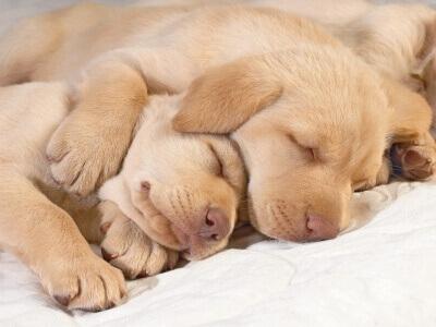 Cachorrinhos dormindo abraçados