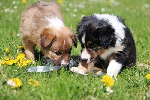 Cachorrinhos comendo ração num campo florido