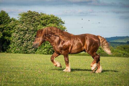 Cavalos de tração: conheça 10 raças