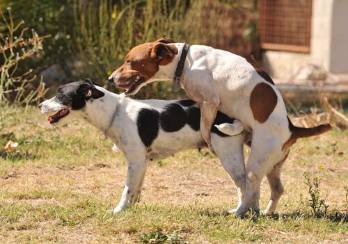 Cachorros cruzando