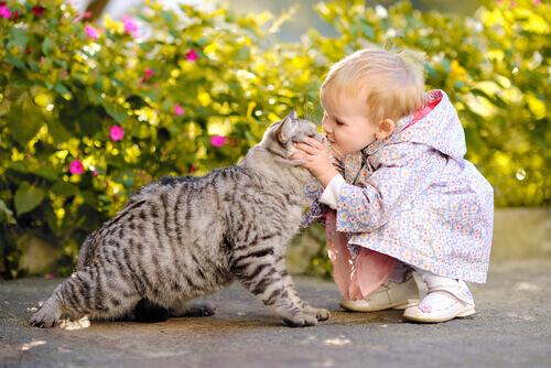 Seu bebê e um gato podem conviver bem?