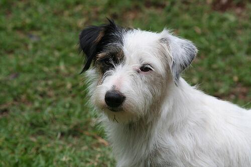 5 habituais sinais de calma em cães