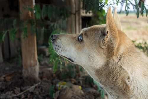 Cachorro vira-lata cego