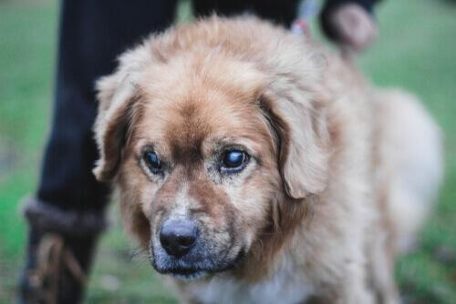 Conselhos para cuidar de um cão cego