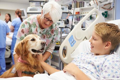 Cachorro terapeuta com menino no hospital