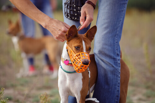 Cachorro com focinheira