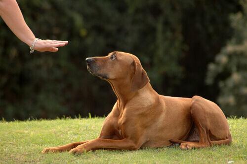 Dona pedindo calma ao cachorro
