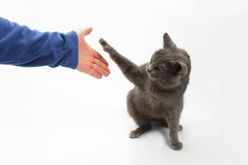 Gato dando a pata