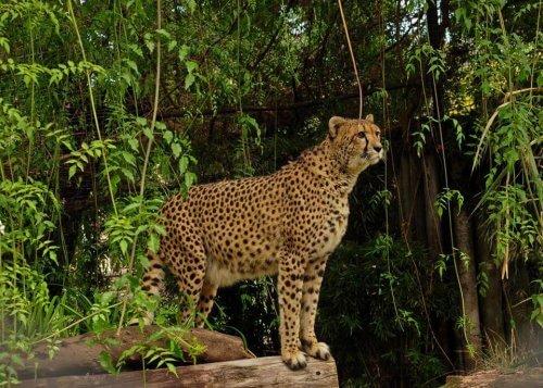 O zoológico de Buenos Aires se transformará em um Eco Parque