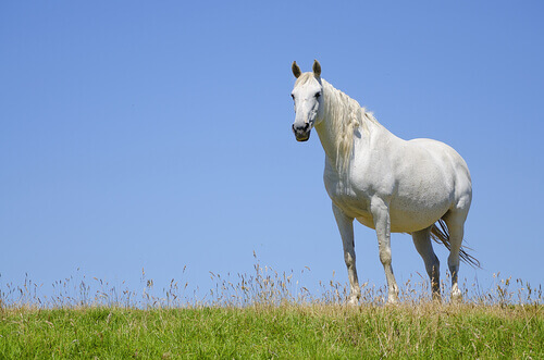 Égua prenha: o que é importante saber?