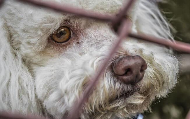 O antídoto contra o abandono de animais é o amor