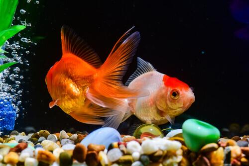 Alimentação para peixes: conselhos para que seja ideal