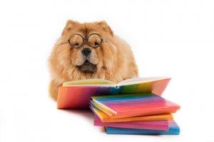 Cachorro de óculos e com livros: eles são inteligentes?