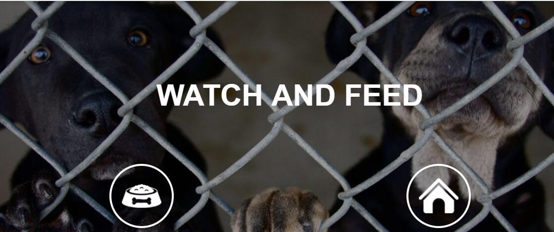 Projeto aumenta visibilidade de abrigos de animais ao redor do mundo