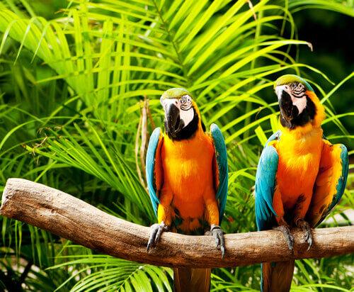 Enriquecimento ambiental para papagaios: saiba mais