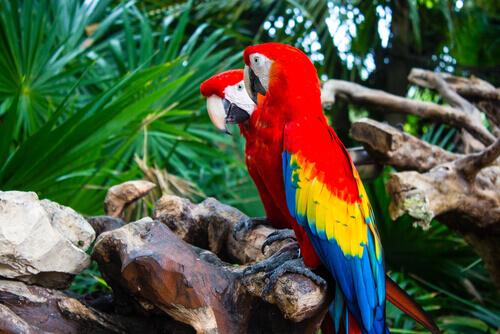 Pássaros falantes: espécies e suas características