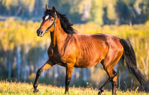 boa saúde do seu cavalo