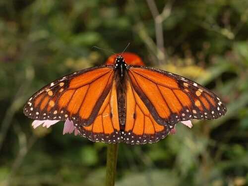 As borboletas mais impressionantes da natureza