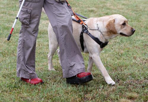 Adestramento dos nobres cães-guia