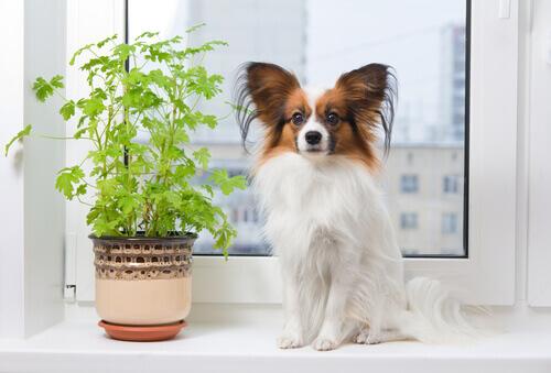 Cachorro ao lado de vaso de planta