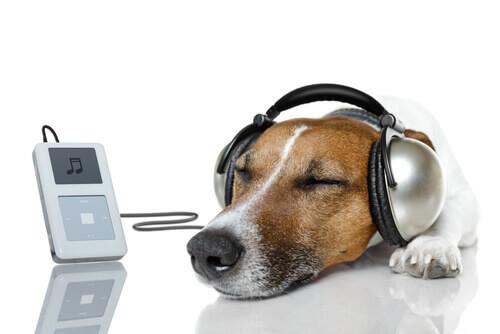 Deixe seu cão com o canal Relax My Dog