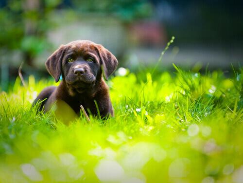 Cachorro no gramado