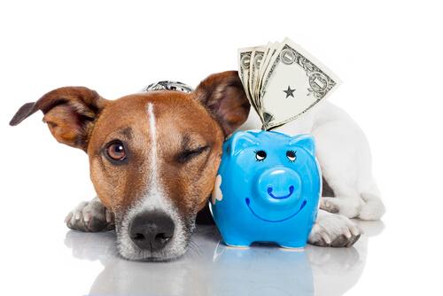 Cachorro ao lado de porquinho com dinheiro